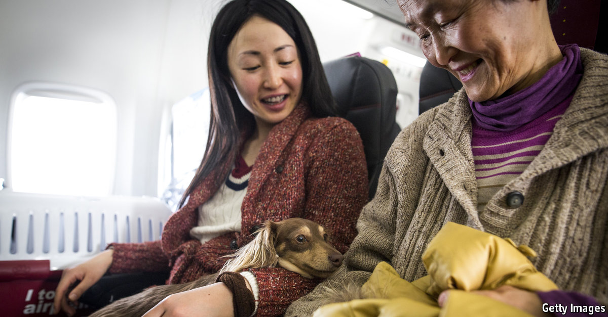 Should animals be allowed to roam freely on jets?