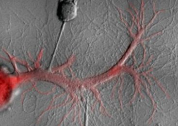 New research suggests problematic memories could be deleted