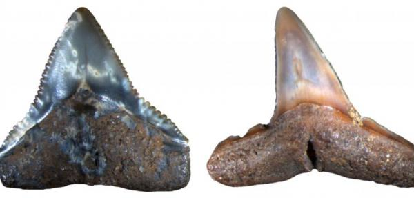 Paleontologists identify extinction event among marine megafauna