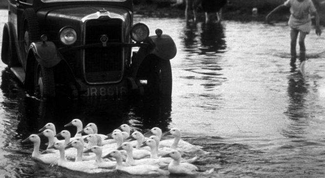 Quacking idea: Could duck sounds replace car honks?