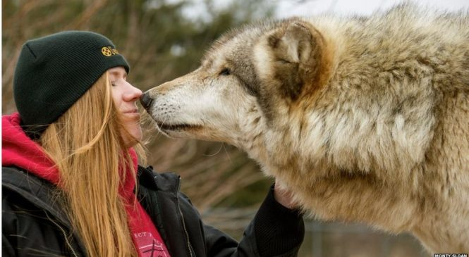 Why dogs are friendly – it's written in their genes