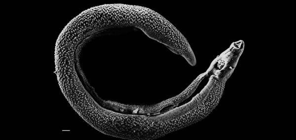 Global warming, rising seas may encourage parasites