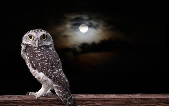 The Best Jobs for Night Owls