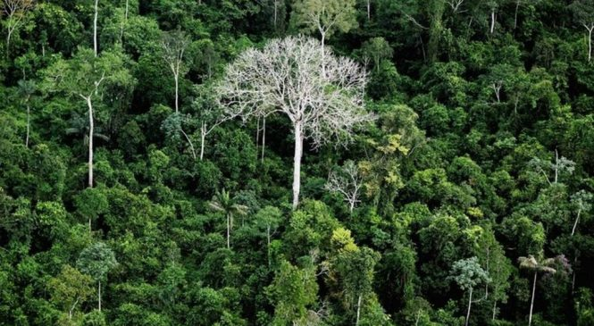 Brazil court blocks Amazon mining decree