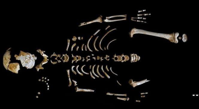 Neanderthal brains 'grew more slowly'