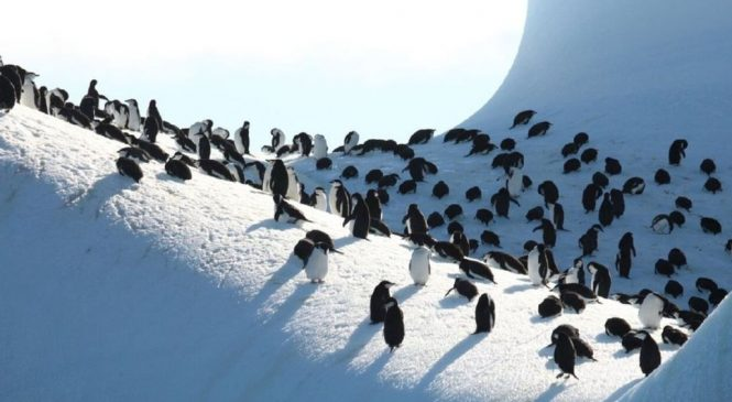 Environmentalists: UK's Antarctic islands need protection