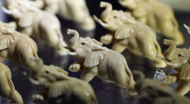 Ivory trade to be banned in UK 'to protect elephants'