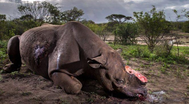 Photo of butchered rhino wins top award