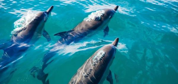 Whales, dolphins form 'human-like' societies and cultures, scientists say