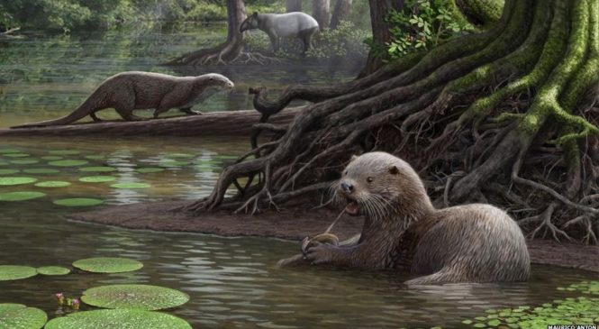 Extinct wolf-sized otter had powerful bite