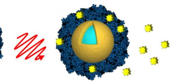 Nanoshells could deliver cancer drugs directly to tumors with fewer side effects