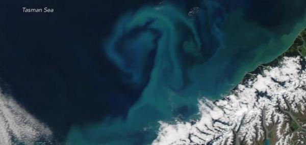 Satellite spots springtime phytoplankton bloom off New Zealand coast