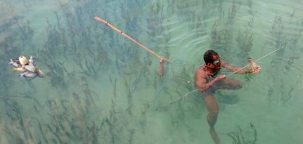 Whether for recreation or sustenance, seagrass proves vital to fishing around the globe