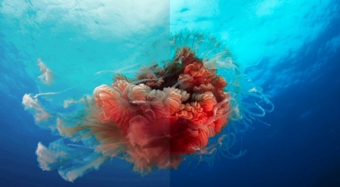 Blue Planet II comes to iPlayer in 4K HDR