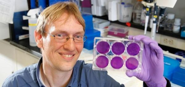 New drug thwarts Zika, dengue, West Nile in cell cultures