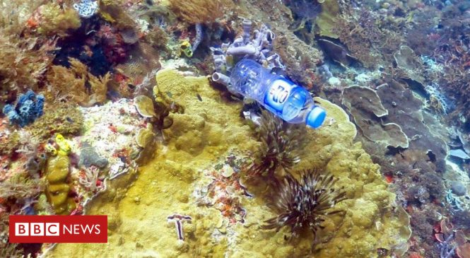 A third of coral reefs 'entangled with plastic'