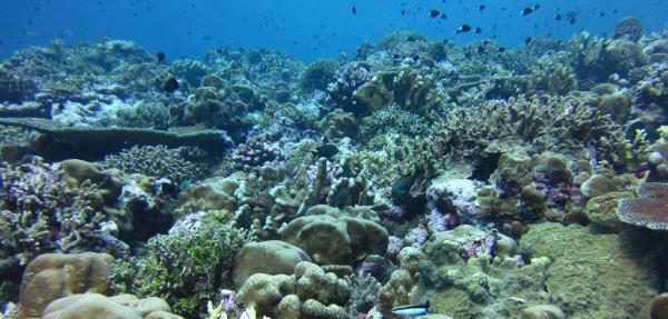 How ocean acidification weakens coral skeletons