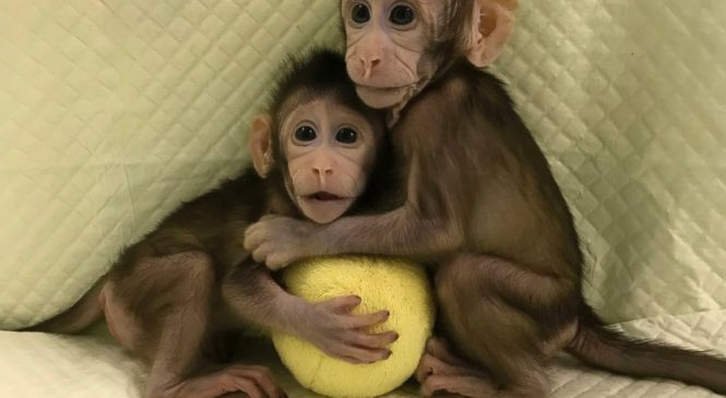 Scientists successfully clone monkeys; are humans up next?