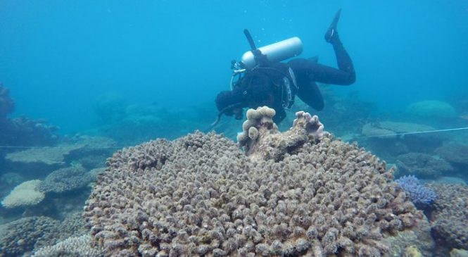 Coral reefs head for 'knock-out punch'