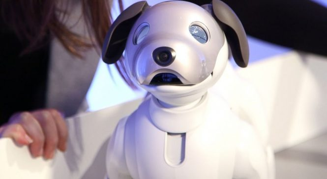 No long walks and cleanup required for Sony's new robot dog