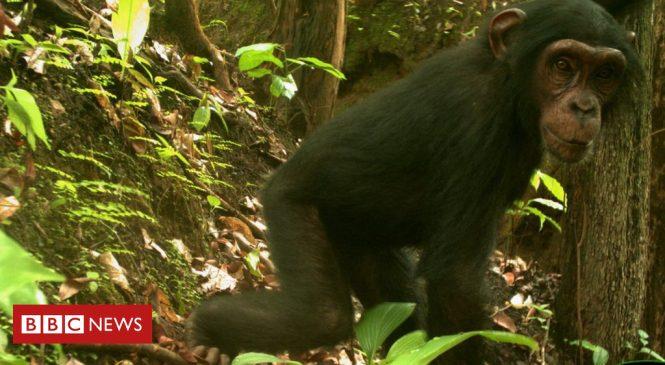 Wildlife secrets of Nigeria's last wilderness