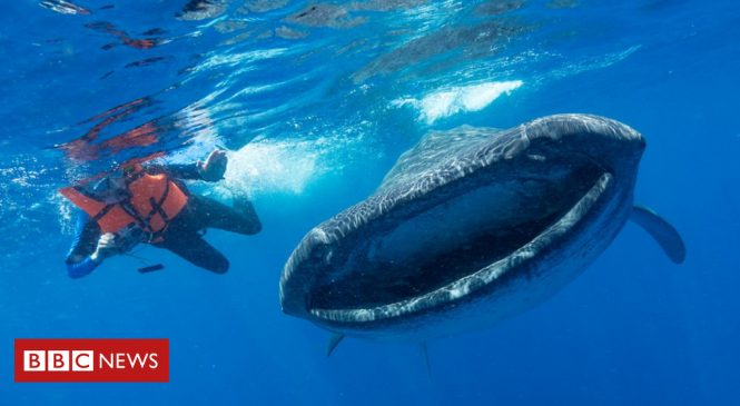 Plastic pollution: Scientists' plea on threat to ocean giants