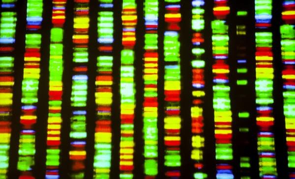 Study reveals secrets of DNA mutation