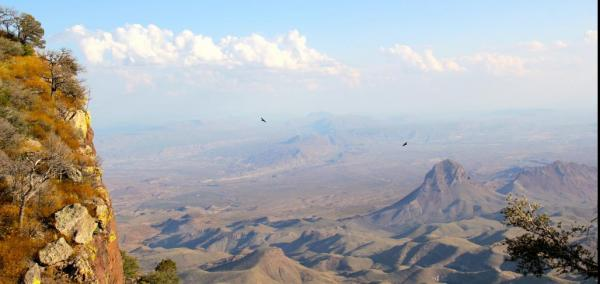 Tiny invertebrates ride high winds across the desert, study shows