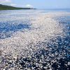 Ocean plastic could treble in decade