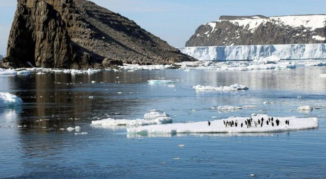 'Supercolony' of Adelie penguins discovered in Antarctica