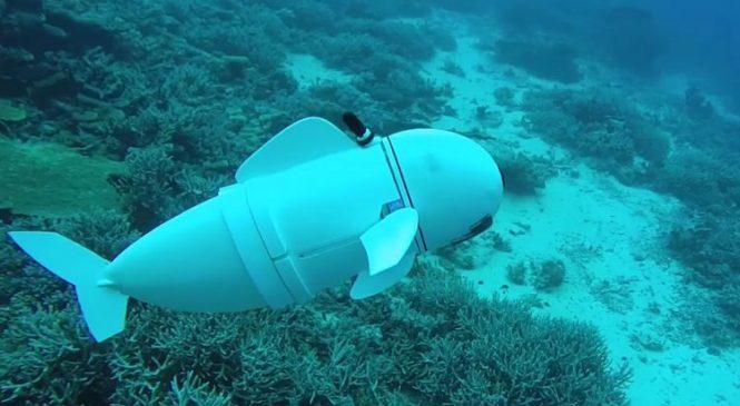 Ocean-going robot fish blends in with aquatic life