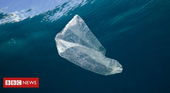 Plastic bag litter falls in UK seas