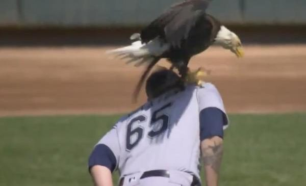 Bald eagle spikes talons into Mariners pitcher during anthem