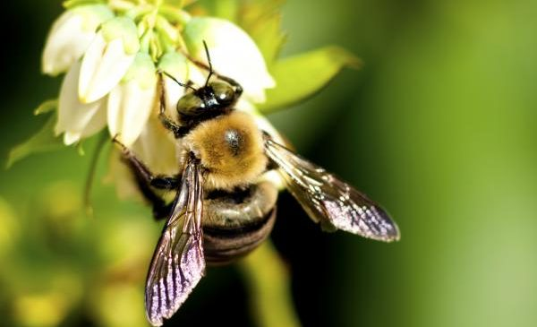 EU bans use of three neonicotinoid insecticides blamed for bee decline