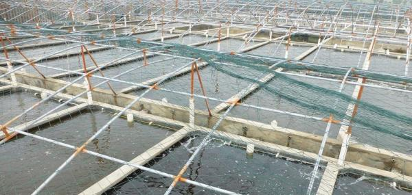 Fish farming can help relieve pressures on land resources, study shows