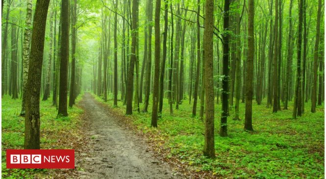 'Feel good' factor not CO2 boosts global forest expansion