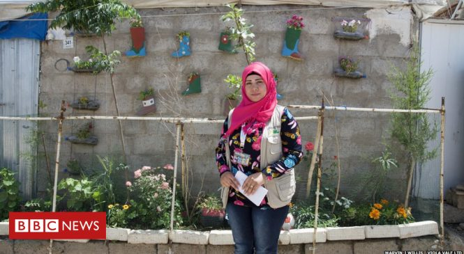 Seeds of hope: The gardens springing up in refugee camps