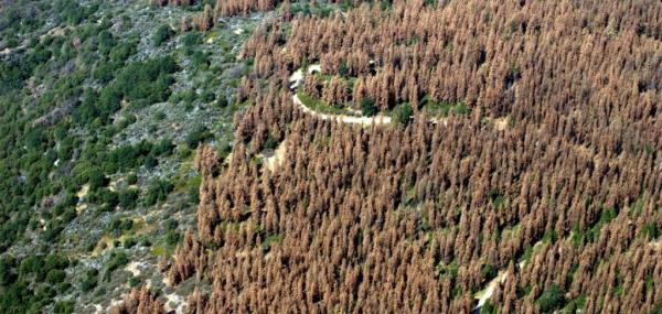 Forest health on one coast can affect forests on the other coast