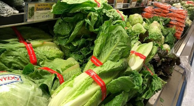 After romaine lettuce outbreak, here's what you should know about E. Coli