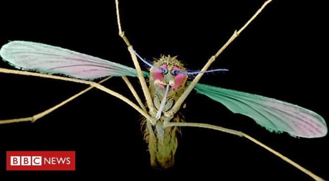 New drug for recurring malaria
