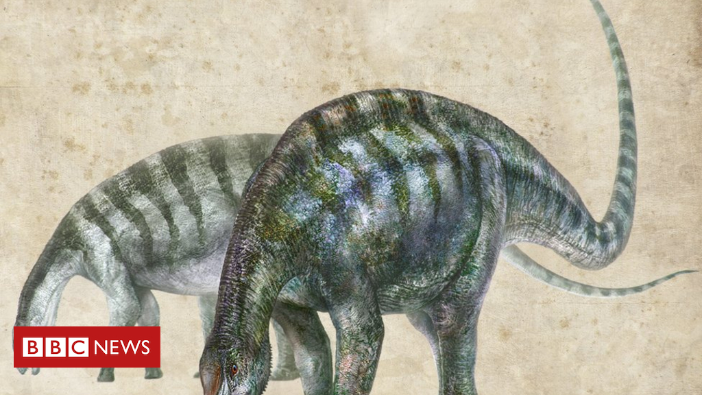 China fossil tells new supercontinent story