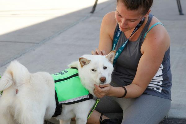 Empathetic, calm dogs try to rescue owners in distress, study finds