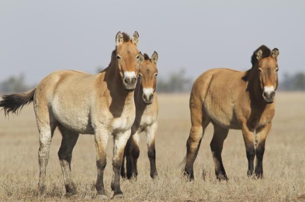 Understanding snorts can help horse caretakers improve animal welfare