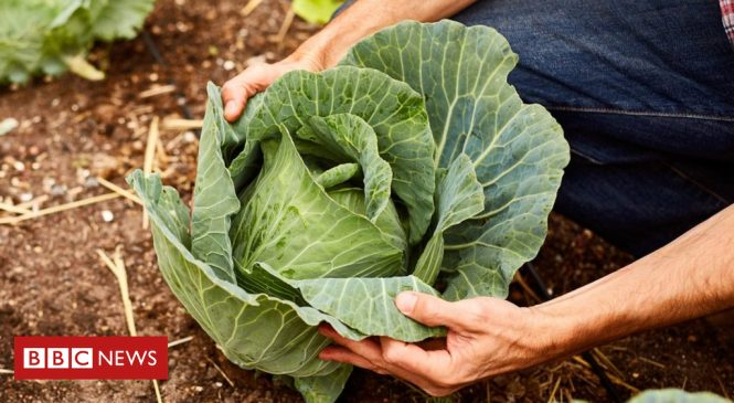 How the humble cabbage can stop cancers