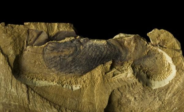 Earth's earliest animals were strange frond-like sea creatures from the Ediacaran period