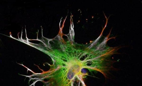 Stem cells grow more quickly, efficiently in new method