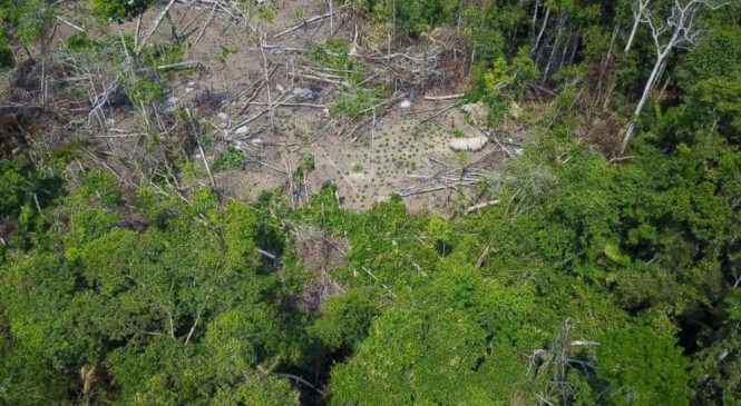 Rare footage of never-before-seen Amazon tribe filmed by drone