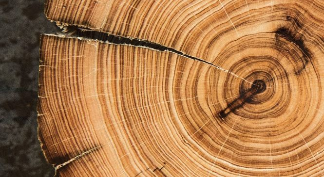 Tree rings helped scientists date ancient Greek eruption