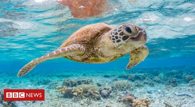 'A single piece of plastic' can kill sea turtles, says study