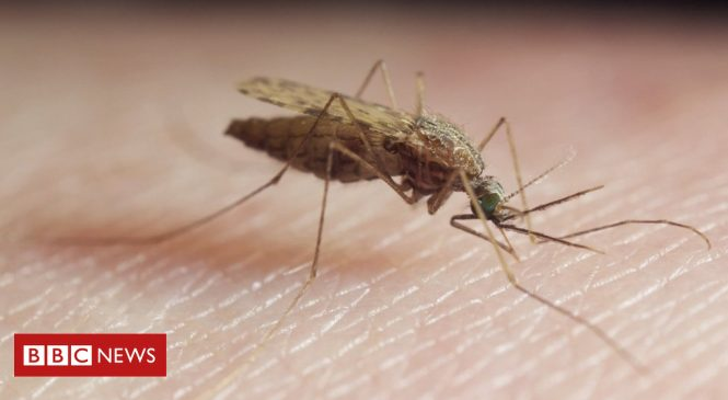 Gene editing wipes out mosquitoes in the lab